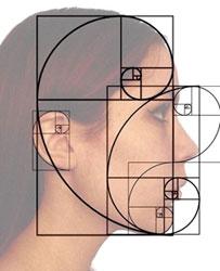 perfil de rosto feminino com aplicação da espiral de fibonacci para representar as proporções faciais